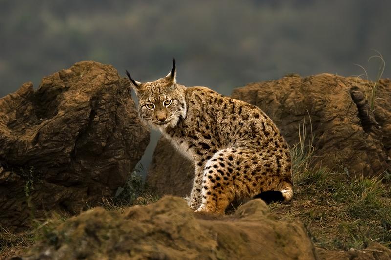 Как фотографировть диких животных